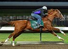 California Chrome Logs First Post-BC Work