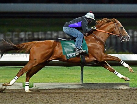 California Chrome - Los Alamitos, November 19, 2016