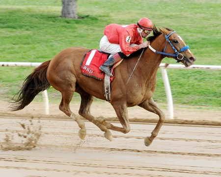 More Than Even wins the 2015 Wilma Mankiller Memorial Stakes.