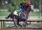 Arrogate working at Santa Anita Park Dec. 8