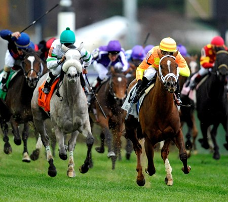 Bobby Flay's More Than Real (Orange&yellow), wins The Breeders Cup Juvenile Filly Turf over Winter Memories.