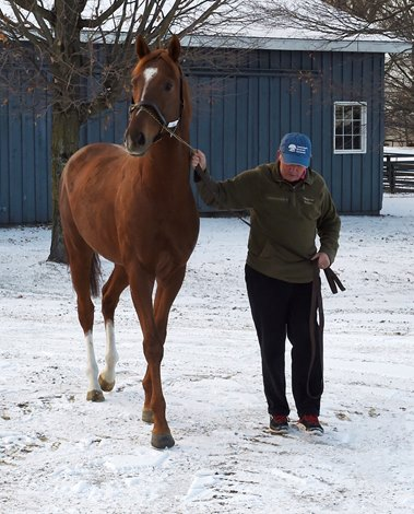 V E Day Relocated To Buck Pond Farm Bloodhorse