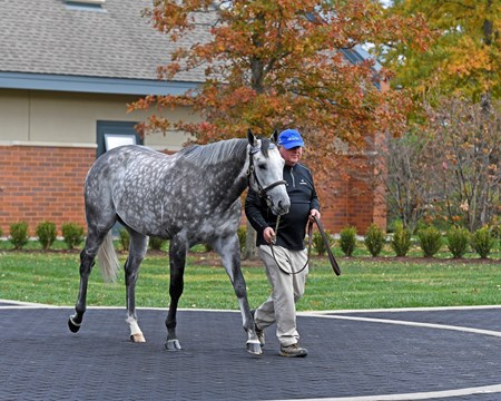 Frosted Godolphin stallions at Jonabell near Lexington, Ky., on Dec. 2, 2016.