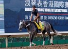 Pure Sensation jogging at Sha Tin Dec. 10