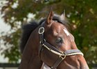 Jess's Dream Retired, to Stand at Ocala Stud