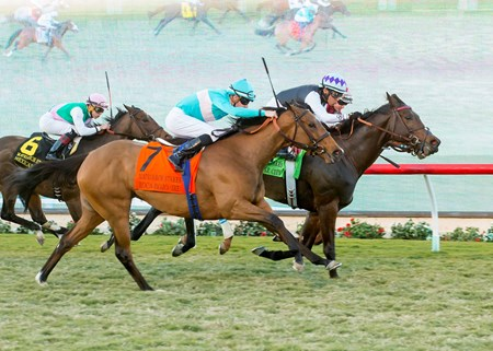 Miss Temple City wins the 2016 Matriarch Stakes at Del Mar Thoroughbred Club