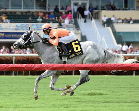 Spectacular Me wins the 2016 Claiming Crown Distaff Dash