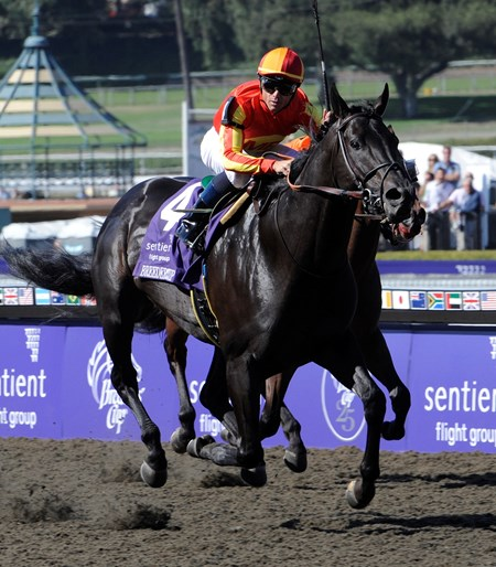 Midnight Lute wins the Breeders' Cup Sprint at Santa Anita October 25, 2008.