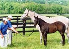 Cara Rafaela with her 2006 Storm Cat filly, Burgundy Ice