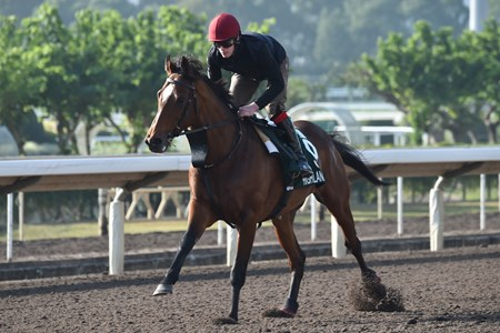 Highland Reel - Hong Kong, December 8, 2016