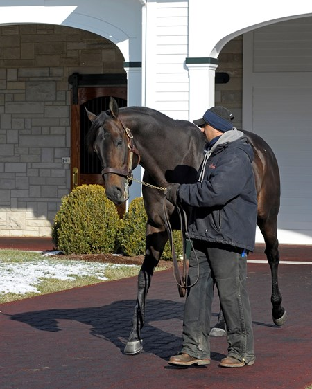Temple City is walked at Spendthrift