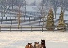 Yearlings at WinStar Farm.