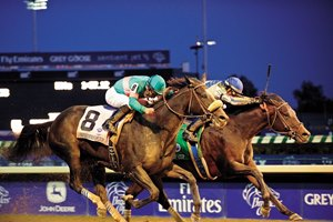 Bloodhorse Thoroughbred Horse Racing Breeding And Sales