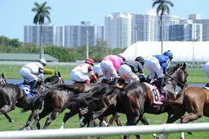 Racing over the turf course at Gulfstream Park