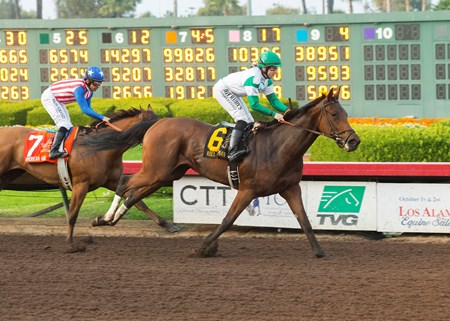 Clearsky Stables' Abel Tasman and jockey Joseph Talamo win the Grade I $300,000 Starlet on Saturday, December 10, 2016 at Los Alamitos Race Course, Cypress, CA.