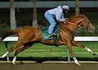 California Chrome worked five furlongs in 1:00.67 on Dec. 10