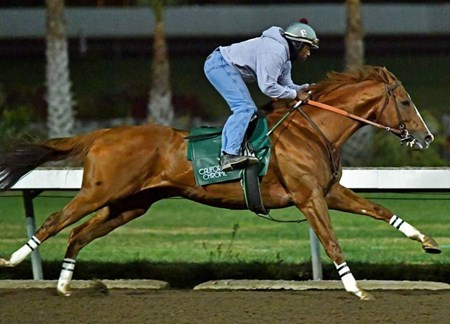 California Chrome - Los Alamitos, December 10, 2016