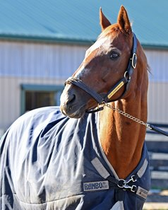 Charismatic at Old Friends Dec. 12