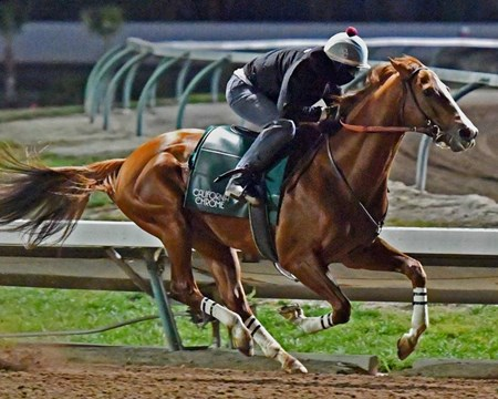 California Chrome - Los Alamitos, December 3, 2016