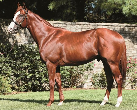 Modernism Backed By Tradition Bloodhorse