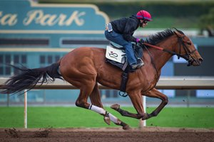 Champagne Room puts in a timed work over Santa Anita's main track in December