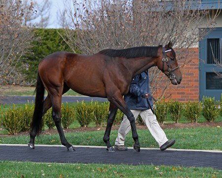 Nyquist at Jonabell near Lexington, Ky., on Dec. 2, 2016.