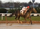 Stallwalkin' Dude wins the Gravesend