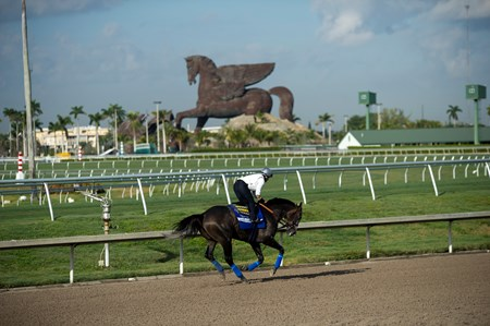 Arrogate at Gulfstream Park  Jan 26 2017;