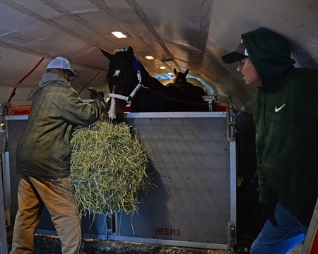 Songbird prepares to leave WinStar for a van ride to the Lexington airport and flight to California on Jan. 23, 2017, at the WinStar training barn near Versailles, Ky. Salbador Ceballos-Gomez foreman for Songbird.