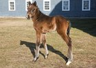 A bay filly out of Lovely Daniella is the first reported foal by Japan. The filly was born Jan. 13 at Waldorf Farm.