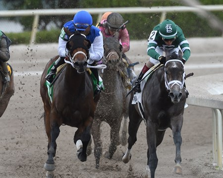 Wildcat Kate wins the 2017 Old Hat Stakes