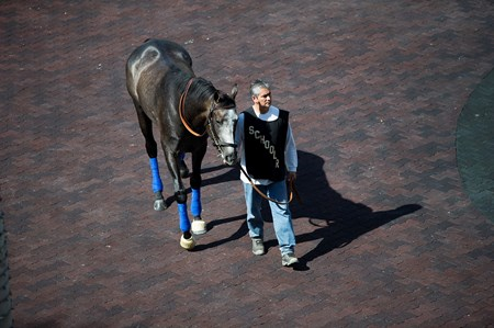 Arrogate schooling at Gulfstream Park  Jan 26 2017