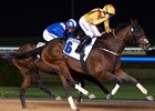 Reynaldothewizard Wins Third Straight Dubawi Stakes