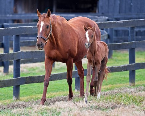 Love The Chase Foals Tapit Half To Chrome Bloodhorse