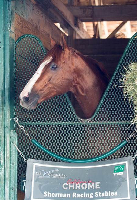 California Chrome at Gulfstream Park  Jan 6 2017