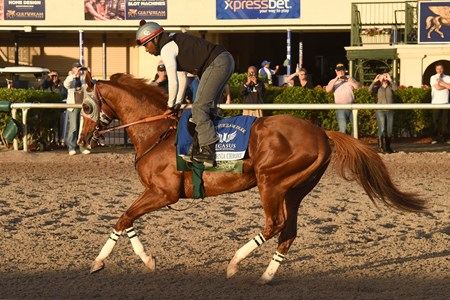 California Chrome - Gulfstream January 14, 2017