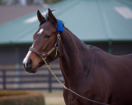 Songbird at WinStar Farm near Versailles, Ky.,  on Jan. 10, 2017.
