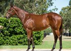 Fastnet Rock Filly Closes Record Gold Coast Book 1