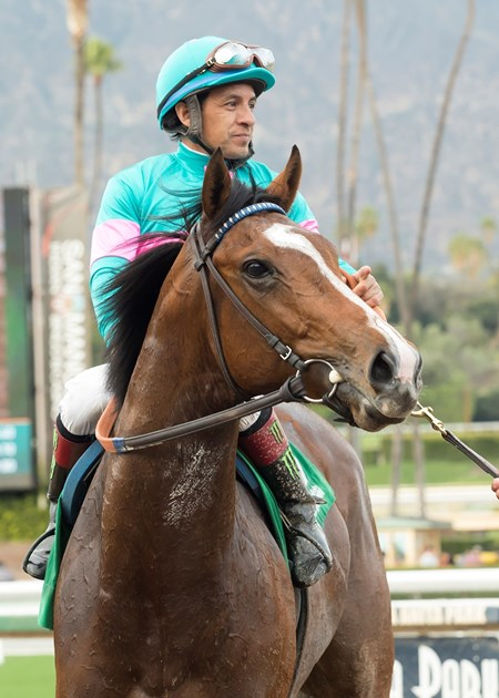 Gormley and jockey Victor Espinoza enter the winner's circle after their victory in the Grade III, $100,000 Sham Stakes, Saturday, January 7, 2017 at Santa Anita Park, Arcadia CA.