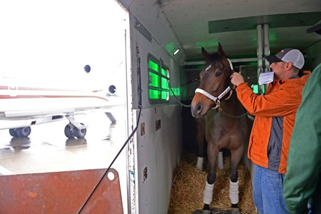 Horse Triton readied for airplane, paperwork and flight to California on Jan. 23, 2017