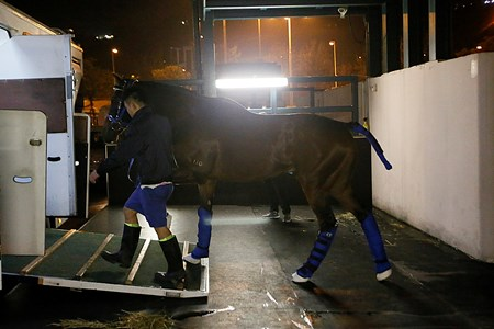 Hong Kong runner Dundonnell departed for Dubai to prepare for the Dubai World Cup Carnival races.