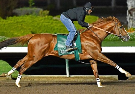 California Chrome - Los Alamitos, January 4, 2017