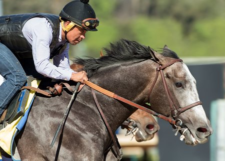 Arrogate is the Longines World's Best Racehorse of 2016.