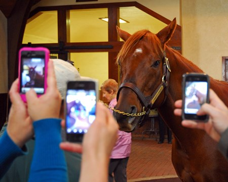Onlookers capture Smarty Jones as he poses during a stallion show.