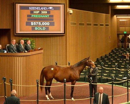 Hip 389, 2017 Keeneland January Sale