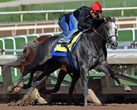 Arrogate - Santa Anita - January 8, 2017