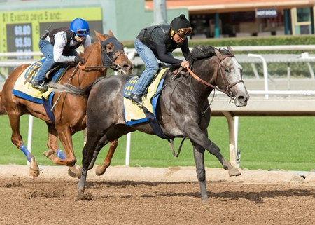 Arrogate - Santa Anita - January 15, 2017