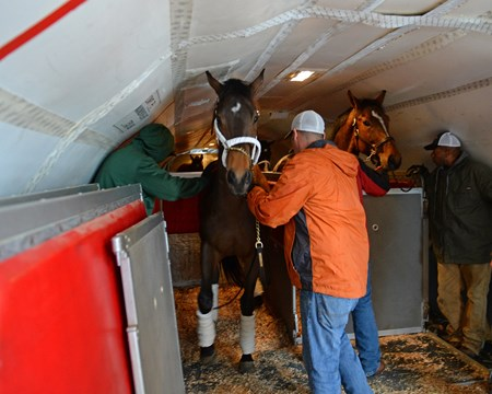 Air Transport: horse Triton loaded into stall on plane for flight to California on Jan. 23, 2017, at Bluegrass Field, Lexington, Ky.