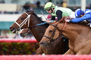 Flatlined wins the 2017 Ft. Lauderdale Stakes