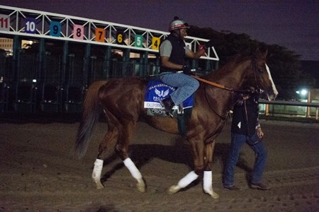 California Chrome  at gate at Gulfstream Park  Jan 26 2017;